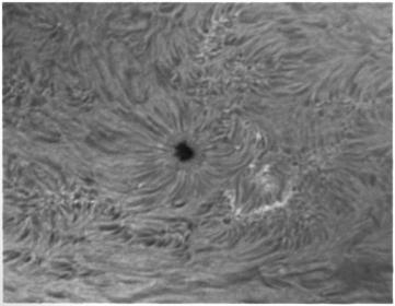 31. Oktober 2012: Sonnenfleck AR1599 h-alpha